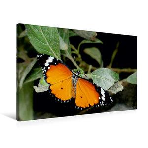 Premium Textil-Leinwand 75 cm x 50 cm quer Monarch