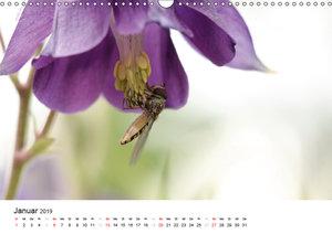 Zarte Natur 2019 (Wandkalender 2019 DIN A3 quer)