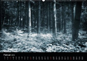 Mystische Wälder (Wandkalender 2019 DIN A2 quer)