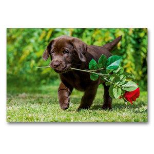Premium Textil-Leinwand 90 cm x 60 cm quer Labrador Retriever -