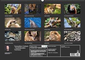 Tierwelten Extrem - Spektakuläre Tierfotos