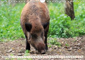Wildschweine - Tiere aus unseren Wäldern (Wandkalender 2019 DIN