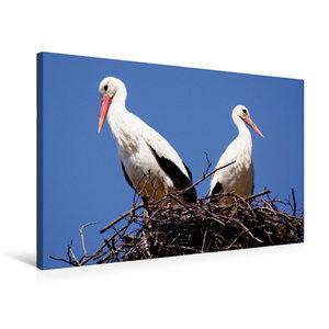 Premium Textil-Leinwand 75 cm x 50 cm quer Storchenpaar in Allen