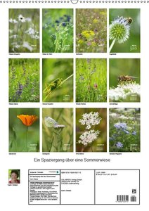 Ein Spaziergang über eine Sommerwiese (Wandkalender 2019 DIN A2