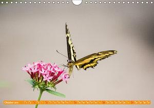 Schmetterlinge im Maxipark in Hamm (Wandkalender 2019 DIN A4 que