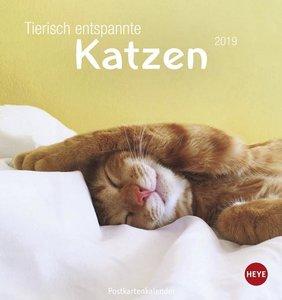 Tierisch entspannte Katzen Postkartenkalender 2019