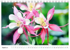 Quer durch das Beet - Die Lieblingsblüten der Insekten