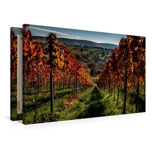 Premium Textil-Leinwand 90 cm x 60 cm quer Im Weinberg