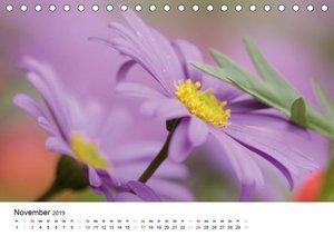 Zarte Natur 2019 (Tischkalender 2019 DIN A5 quer)