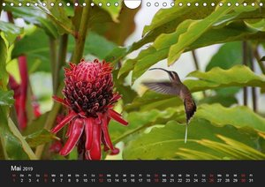 Kolibris, die schnellsten Wirbeltiere der Welt (Wandkalender 201