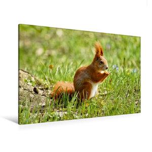 Premium Textil-Leinwand 120 cm x 80 cm quer Rotes Eichhörnchen a