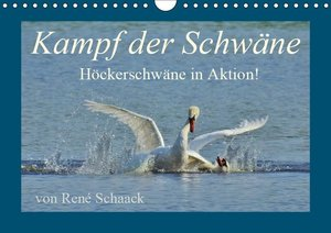 Kampf der Schwäne. Höckerschwäne in Aktion! (Wandkalender 2019 D