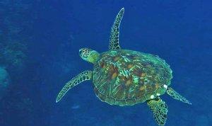 Wunderwelt Ozeane 3D Imax