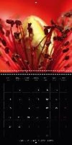 Red Poppy Tales (Wall Calendar 2015 300 × 300 mm Square)