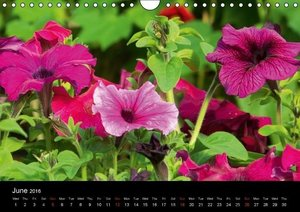The Sense of a Flower (Wall Calendar 2016 DIN A4 Landscape)
