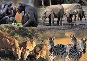 Jumbo Spiele 17086 - Planet Erde 2: Tierfamilien, 1000 Teile Puz