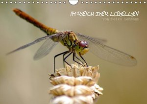 Im Reich der Libellen (Wandkalender 2016 DIN A4 quer)