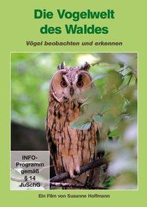 Vogelwelt des Waldes