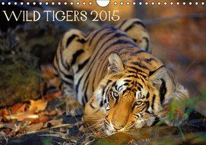 Wild Tigers 2015 (Wall Calendar 2015 DIN A4 Landscape)