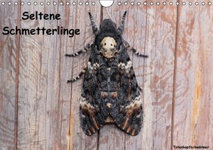 Seltene Schmetterlinge (Wandkalender 2016 DIN A4 quer)
