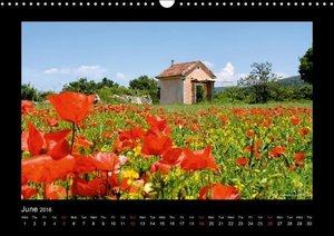 Poppies of my heart (Wall Calendar 2016 DIN A3 Landscape)