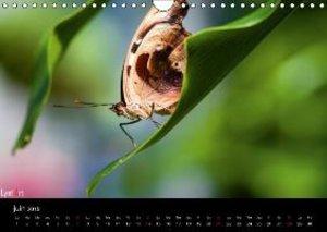 Les papillons exotiques (Calendrier mural 2015 DIN A4 horizontal