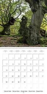 Gnarled old trees (Wall Calendar 2015 300 &times 300 mm Square)