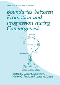 Boundaries between Promotion and Progression during Carcinogenes