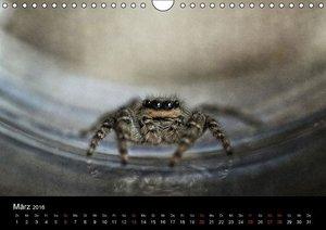 Spinnentiere 2016 (Wandkalender 2016 DIN A4 quer)