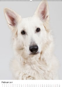 Hunde im Portrait