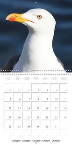 Seagulls Intelligent beauties (Wall Calendar 2015 300 × 300 mm S
