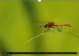 Im Reich der Libellen (Wandkalender 2016 DIN A3 quer)