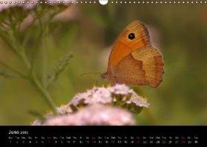 Butterflies in Tyrol (Wall Calendar 2015 DIN A3 Landscape)