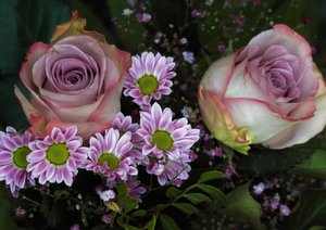 Florale Harmonie - Visuelle Poesie der Blumen (Posterbuch DIN A2