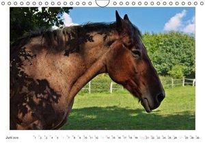 Dölling, A: Pferdekalender (Wandkalender 2015 DIN A4 quer)