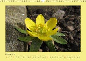 Sprenger, B: Mauerblümchen (Wandkalender 2015 DIN A3 quer)