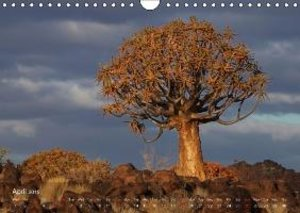 Wolf, G: Quiver Trees (UK-Version)