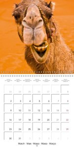 Funny animals edition: Laughter is healthy (Wall Calendar 2015 3