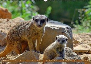 Erdmännchens Kinderstube (Wandkalender 2016 DIN A2 quer)