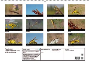 Faszination Gottesanbeterin - Die Welt der Mantis