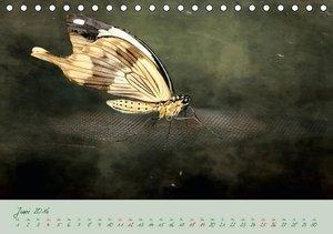 Edelfalter - 2 - (Tischkalender 2016 DIN A5 quer)
