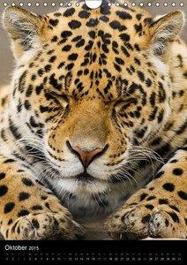 Stanzer, E: Großkatzen-Gesichter (Wandkalender 2015 DIN A4 h