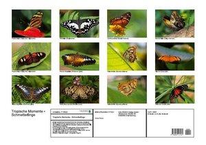 Tropische Momente - Exotische Schmetterlinge (Posterbuch DIN A2