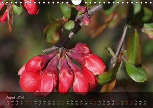Poetry of Blossom Buds (Wall Calendar 2016 DIN A4 Landscape)