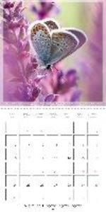 Butterflies Beauty of Nature (Wall Calendar 2015 300 × 300 mm Sq