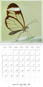 Butterflies Beauty of Nature (Wall Calendar 2015 300 × 300 mm Sq