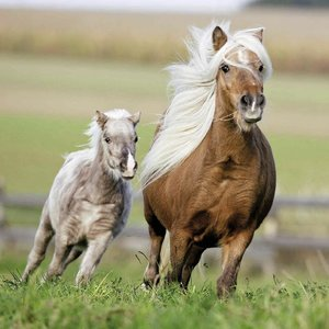 Ponyfreundschaft. Puzzle 3 X 49 Teile