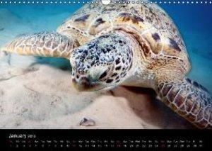 Sven Gruse Under Water! Fish Shooting (Wall Calendar 2015 DIN A3