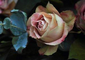 Rosen-Geheimnisse - Visuelle Poesie der Blumen (Posterbuch DIN A