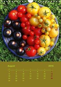 Tomaten - Alles BIO! (Wandkalender 2016 DIN A4 hoch)